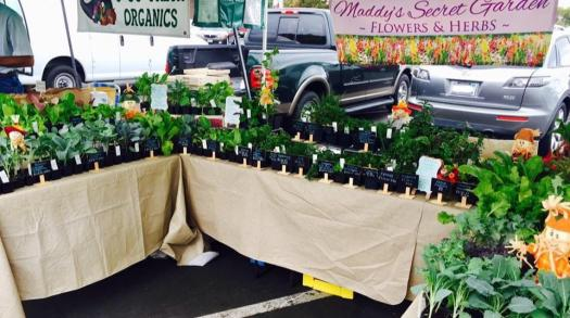 Home-based plant nursery in Visalia started by 17-year-old