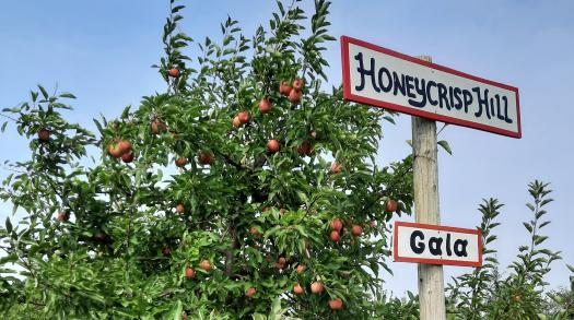 Wisconsin Apple Picking Is The Perfect Late Summer Activity For The Whole Family